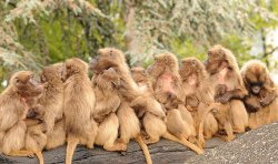 primatengruppe